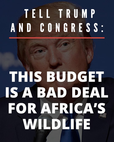 Tell Trump and Congress: this budget is a bad deal for Africa's wildlife