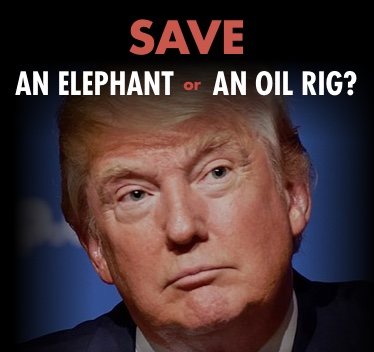 Save an elephant or an oil rig?